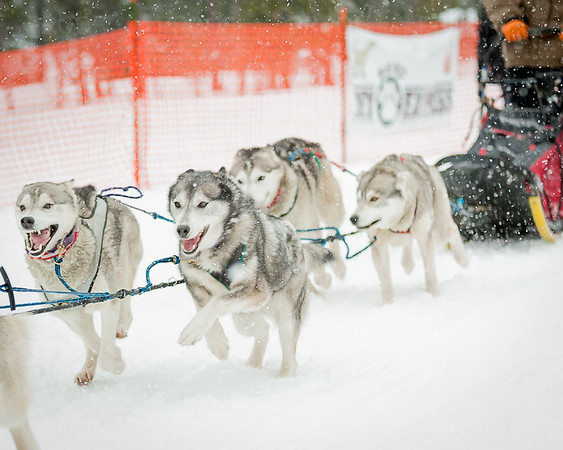 2017 Bachelor Butte Dog Derby - 2017