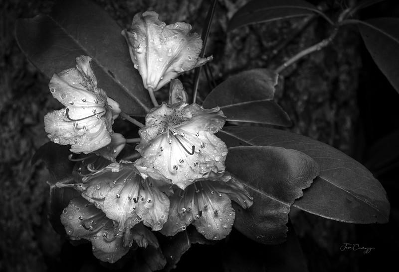 White Flower 2.jpg