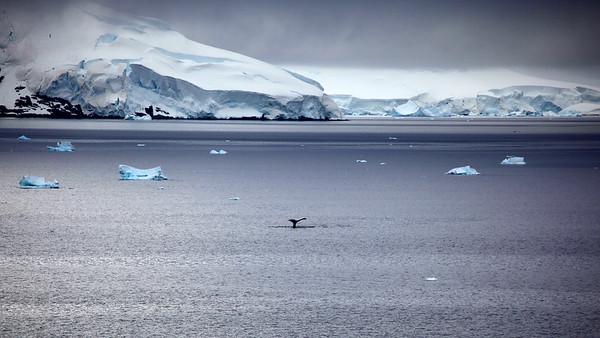 2012 Cruise to Antarctica