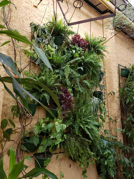 wall of greenery at Rosmarino Restaurant