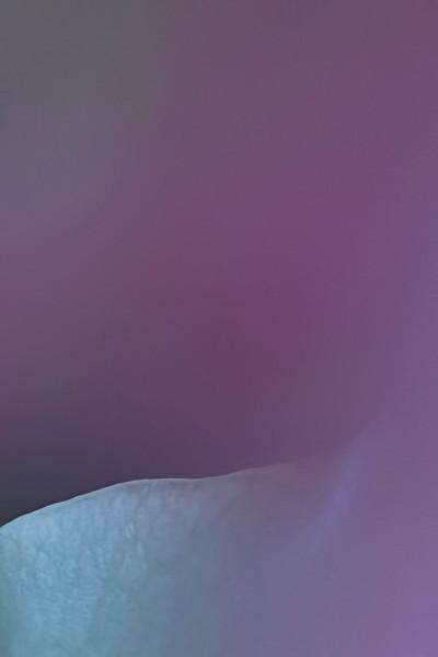 MACRO Rose v3 6076.jpg