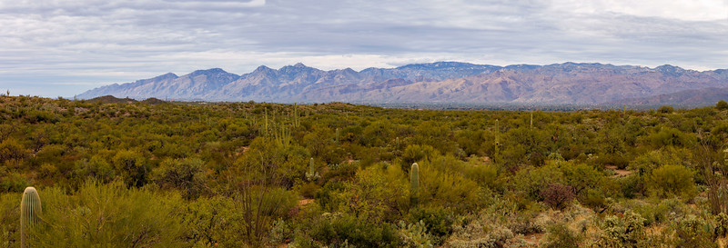 Saguaro Valley