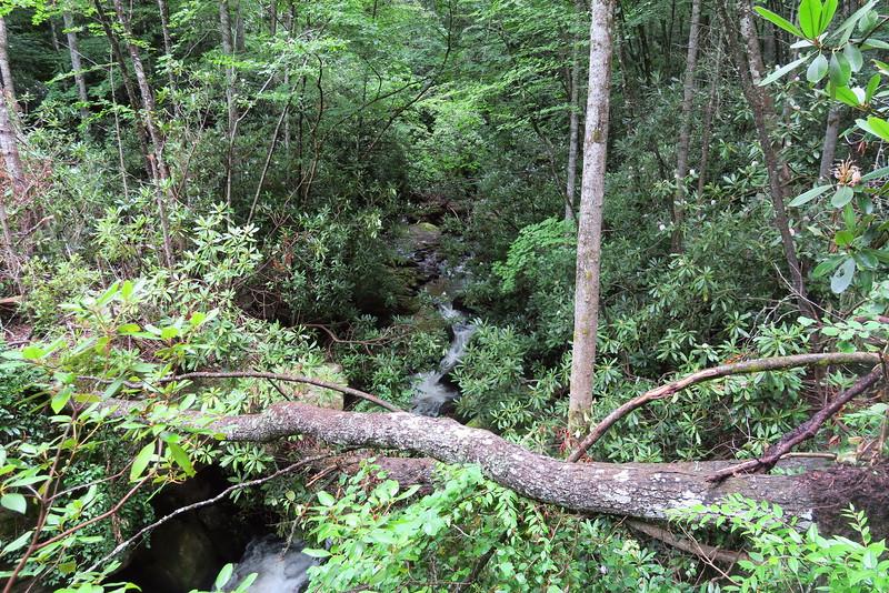 Sol's Creek Falls Trail