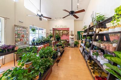 Baton Rouge Succulent Co.