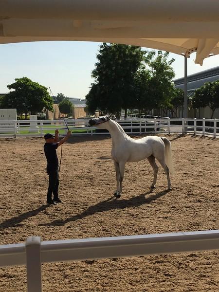 Doha Racing and Equestrian Club - Bridget St. Clair