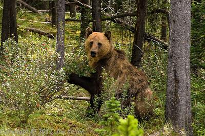 Banff 2005
