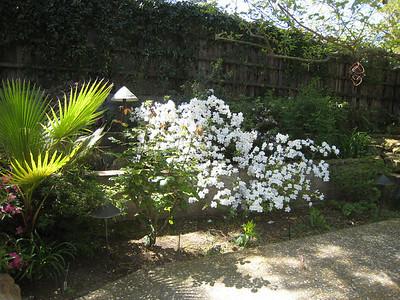 Spring 2010 at 2864 San Benito Dr.