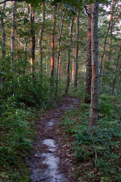 Cape Sunset Trail.jpg
