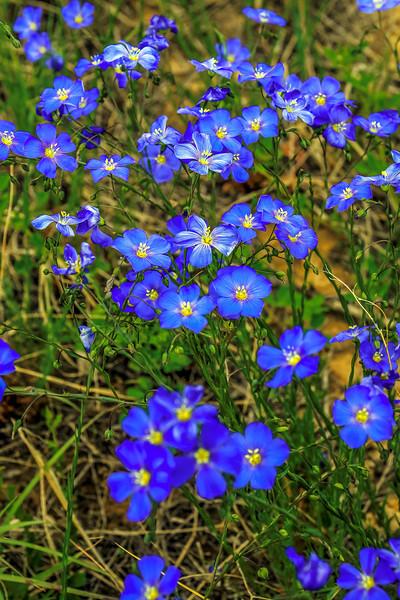 FlowerLefthandCanyonBoulderCO-021