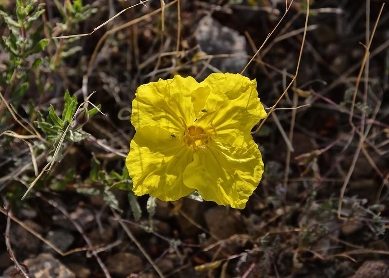 NEA_6308-7x5-Flower.jpg