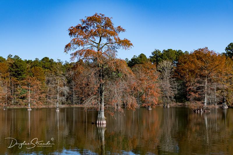 0073-Trap Pond SP.jpg