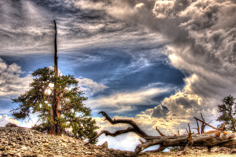 CaliforniaBristolConePinesSpike&cloudsDSC_4643_4_5_tonemapped.jpg