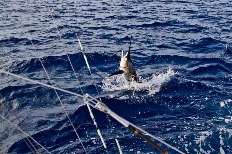 2012 • Los Sueños Marlin Invitational