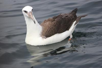Kaua'i Birds
