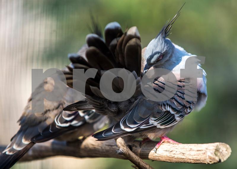 birds 9.jpg
