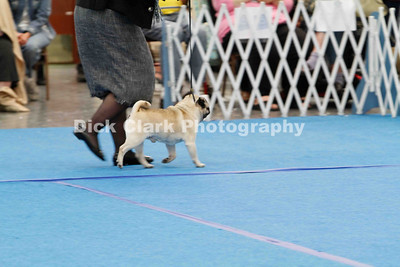 Best of Breed First Cut Dogs