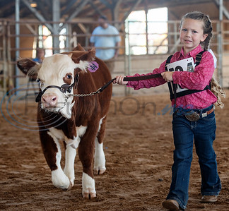 9/26/19 East Texas State Fair: Miniature Hereford and Zebu Show by Sarah A. Miller