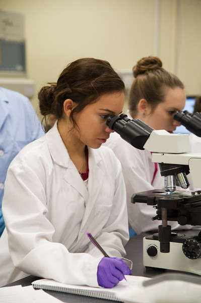 Student Bryana Gandara observes the differences in bacteria for her assignment.