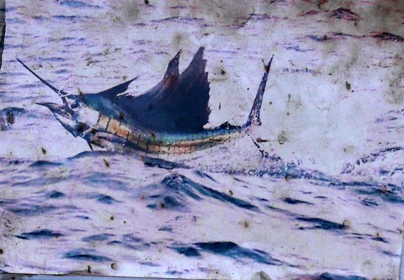 fish2qb.JPG
