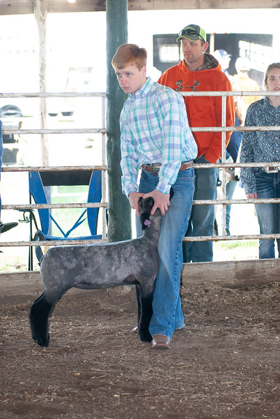 2019 Flint Hills Classic Sheep Show