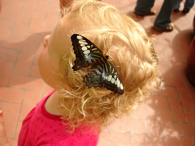 Butterfly Show 2008