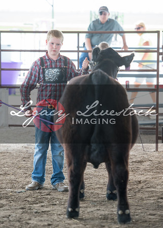 McPherson County Steer Candids