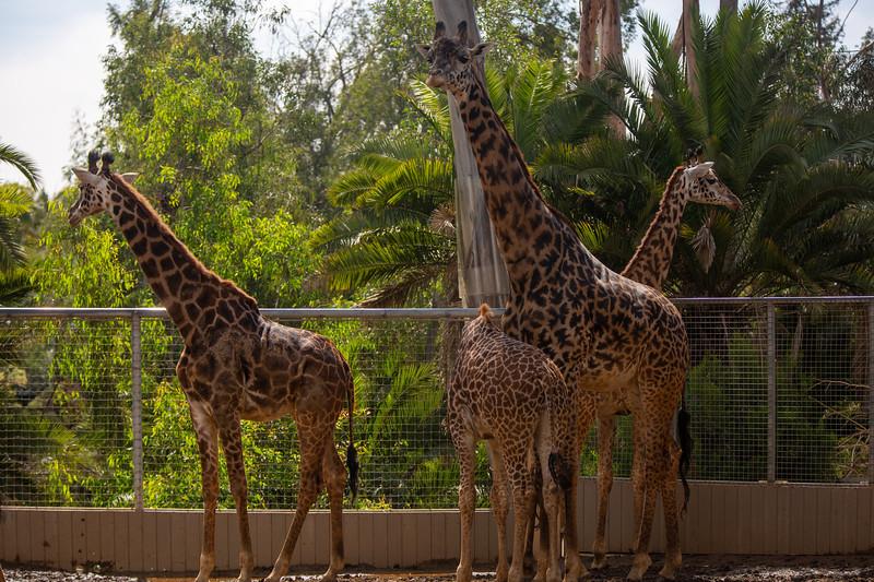 SD Zoo 3.20-145.jpg