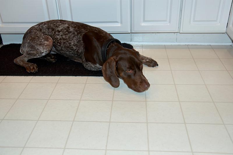 Morgen On Kitchen Floor - 2007.01.14 - DSC_0069.jpg