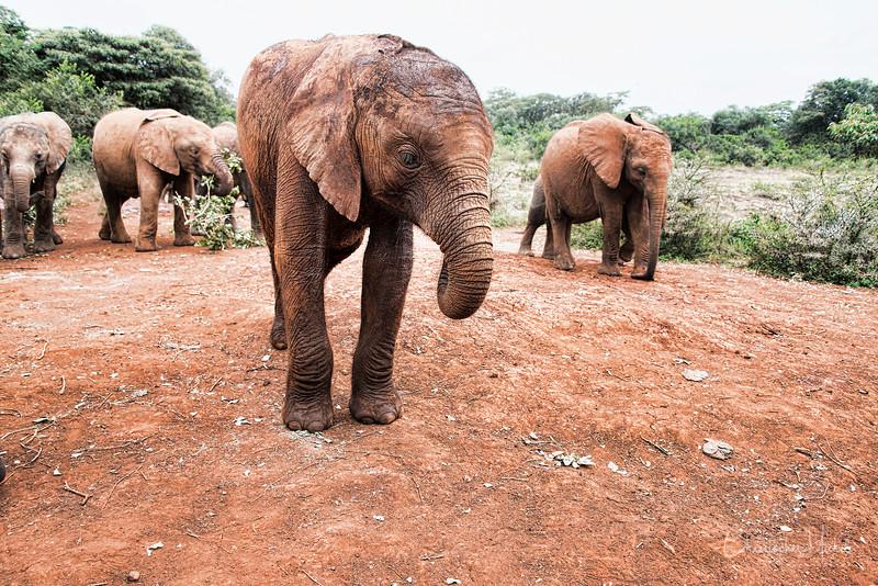 Aug312013_nairobi_blixens_elephant_2449.jpg