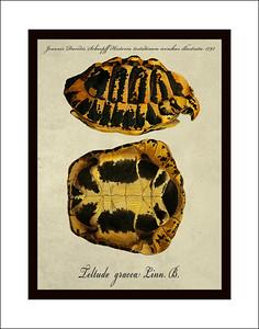 Turtle Prints