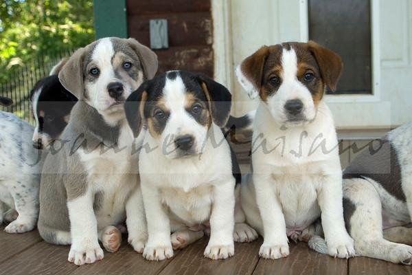 WAAAG: Pippa's Pups 6-20-17
