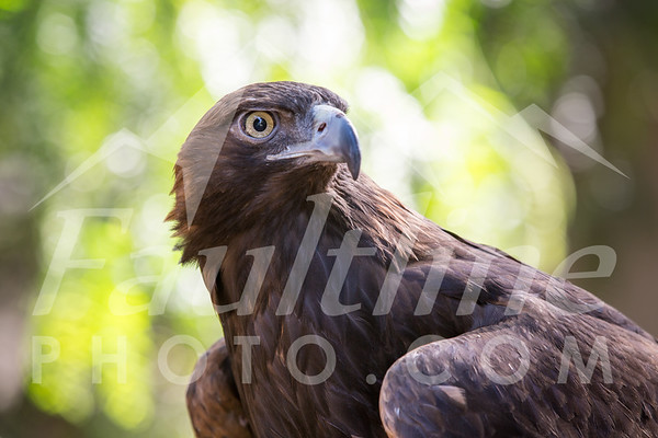 Raptor Center Open House May 6, 2017