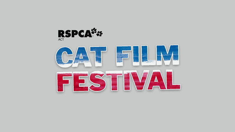 RSPCA ACT Cat Film Festival 2016