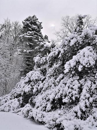 Winter2021