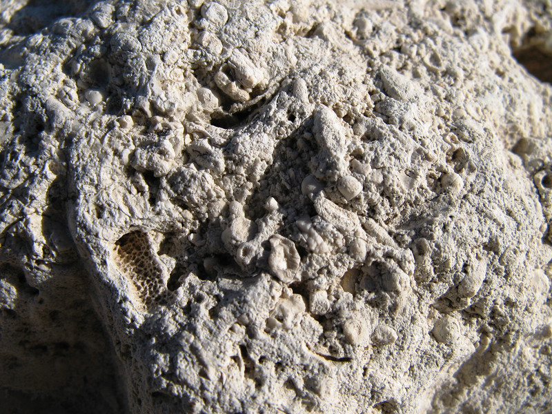 Guadalupe fossil sponge coral.jpg