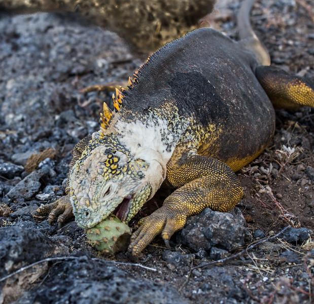 Galapagos_MG_4967.jpg