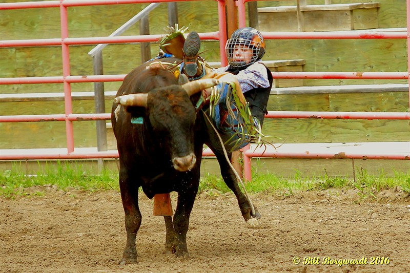 Steer Riding - Daines Pick-nic 2016 0122.jpg