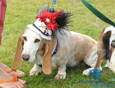 Corky's Canine Fashion Show & Pet Expo