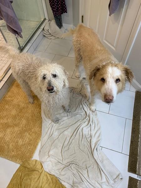 2019-12-26 - The dogs after a bath (2).JPEG