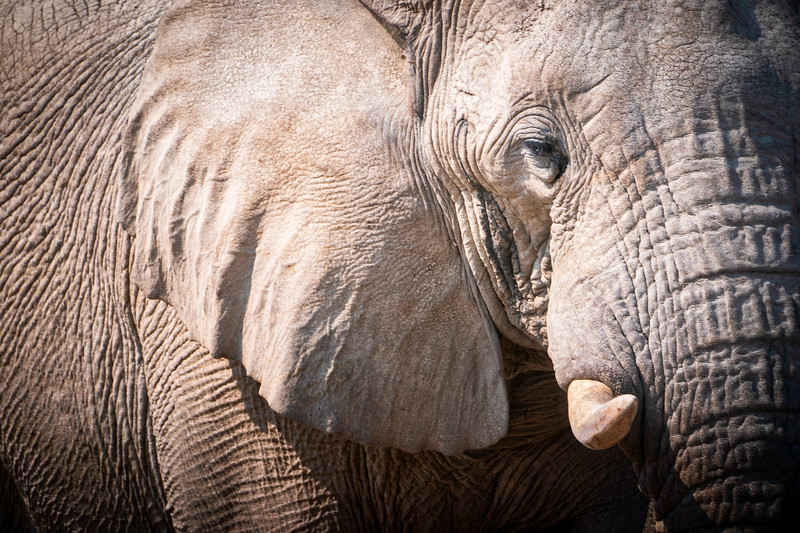 White Elephant, Notosha National Park