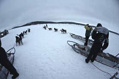 Husky Dog Ride, Arctic Sweden