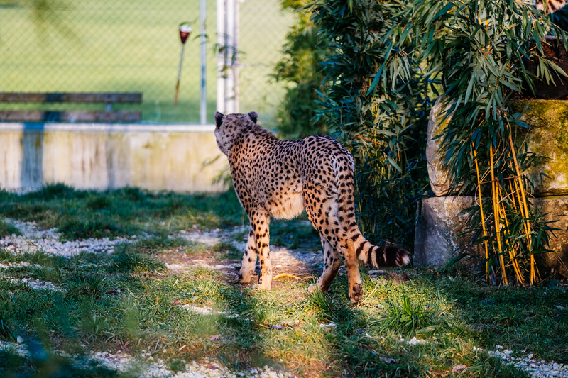 Tonis Zoo-0196.jpg