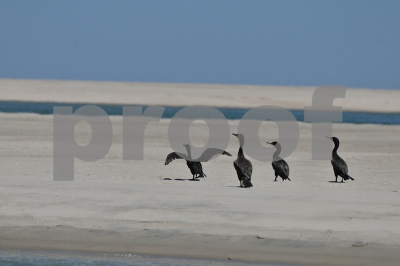 Pictues from cape and father day 153.JPG