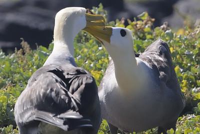Galapagos Islands 05/20/2011