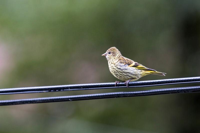 Curious Bird-3865.JPG