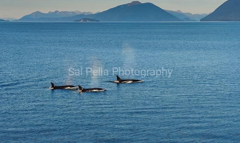 Icy Strait Point Alaska 2010