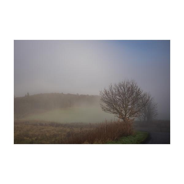 355_Fog_10x10.jpg