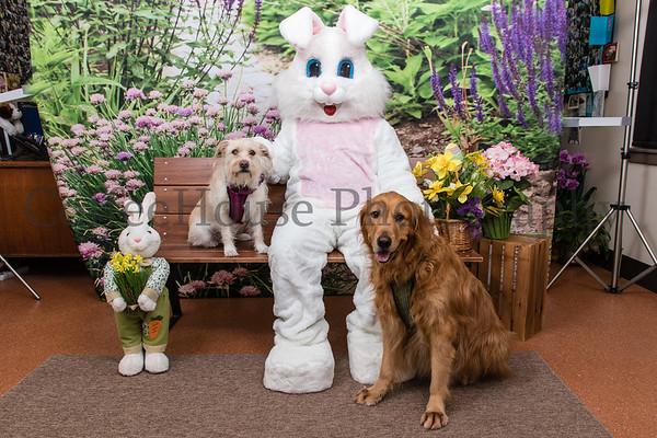 Easter Bunny & Pets 2019