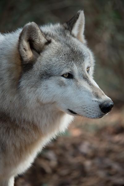 Seacrest Wolves_-33.jpg