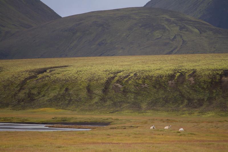 2014 ICELAND-142.jpg